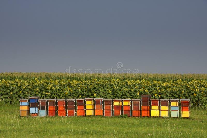 Bienenbienenstöcke stockfoto