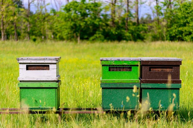 Bienenbienenstöcke auf dem Feld lizenzfreie stockfotos