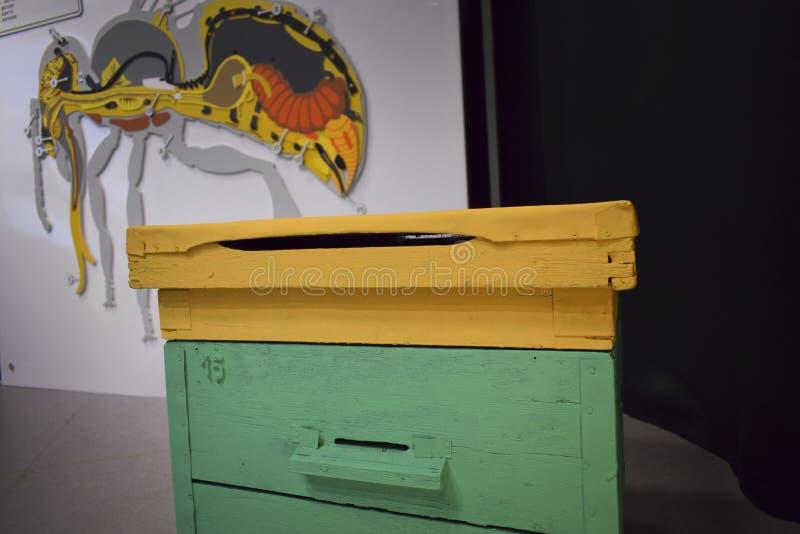 Bienenbienenstöcke mit wandernden Bienen lizenzfreies stockfoto
