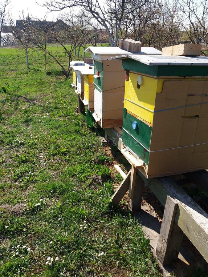 Bienenbienenst?cke lizenzfreie stockfotos