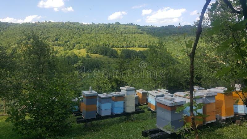 Bienenbienenstock-Grün eco stockbilder