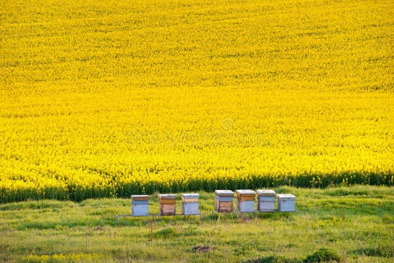 Bienenhaus lizenzfreie stockbilder
