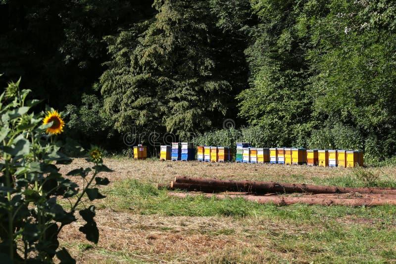 Bienenhaus mit bunten Bienenstöcken am Rand des Waldes stockfoto