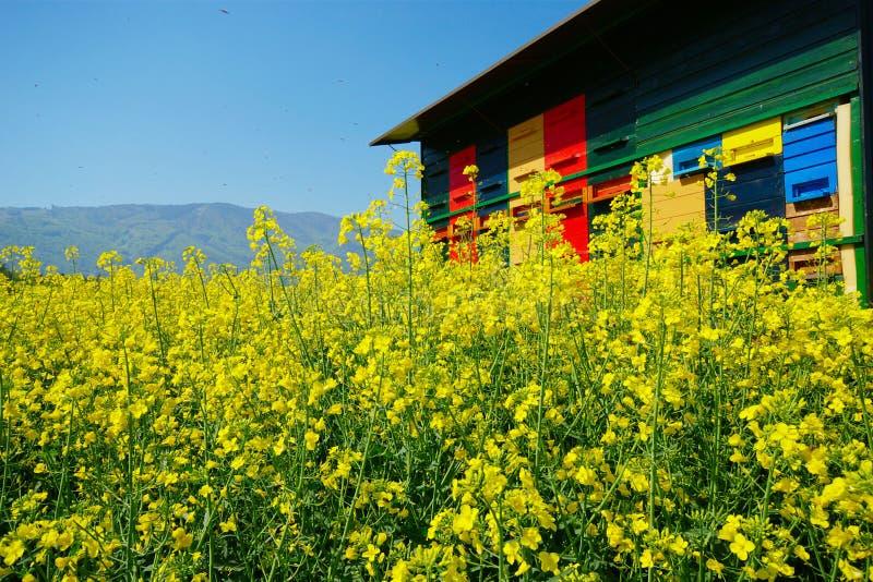 Bienenhaus und Canola lizenzfreies stockfoto