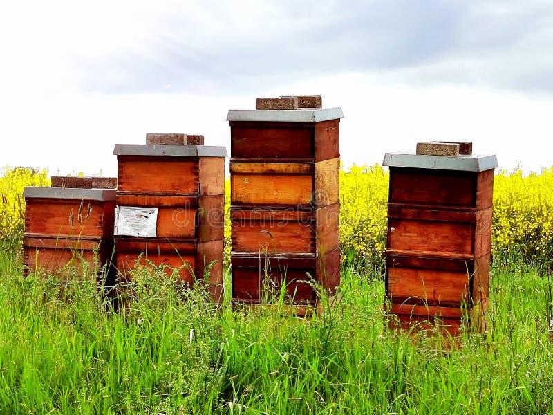 Bienenstöcke auf einem Feld lizenzfreie stockfotos