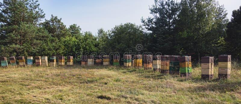 Bienenstöcke in einer dänischen Wiese stockfoto