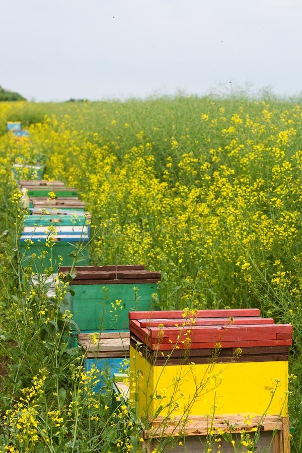 Bienenstöcke nahe einem Canolafeld lizenzfreies stockfoto