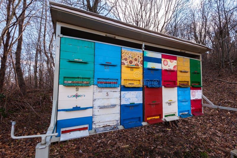 Bienenst?cke von Bienen im Bienenhaus lizenzfreies stockfoto