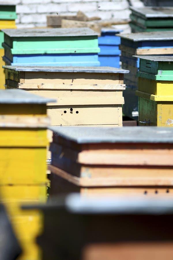 Bienenstadt stockbilder
