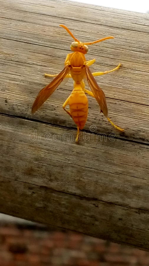 Bienenstich stockfotos
