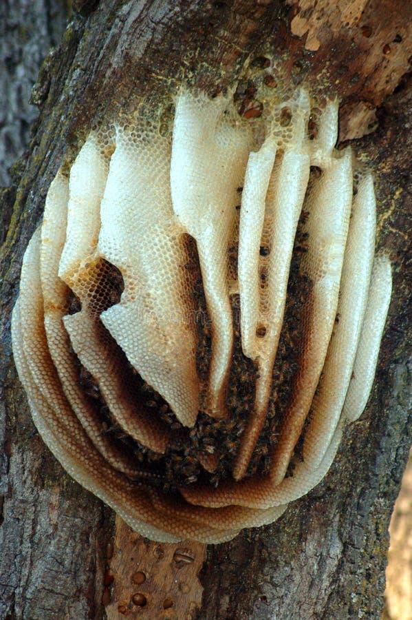 Bienenstock lizenzfreie stockfotografie