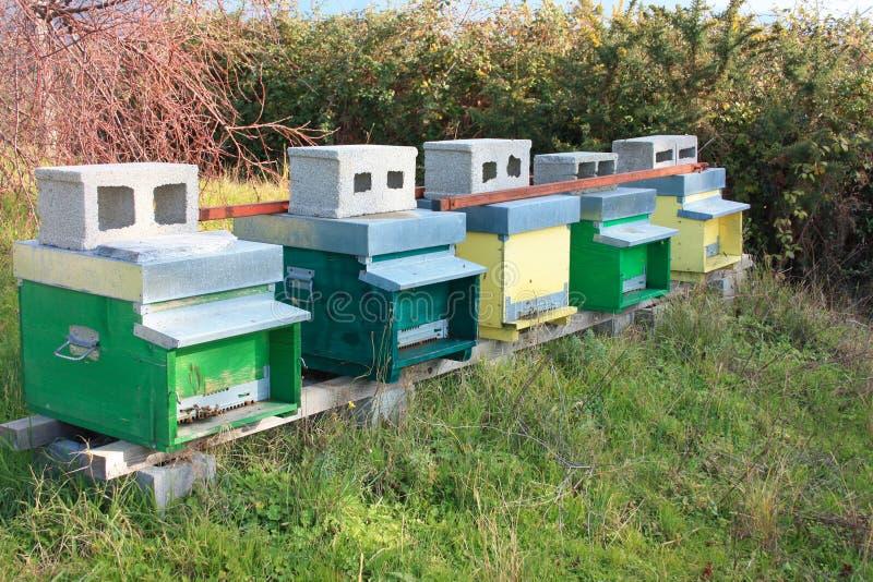 bienenstock bienenstöcke einige Reihen von Häusern für Bienen von verschiedenen Farben stockfotos