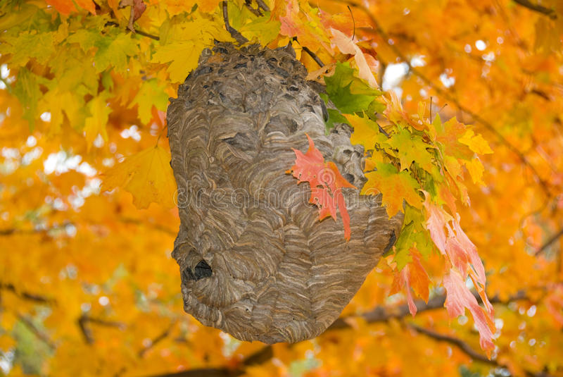 Bienenstock im Herbst lizenzfreie stockfotografie