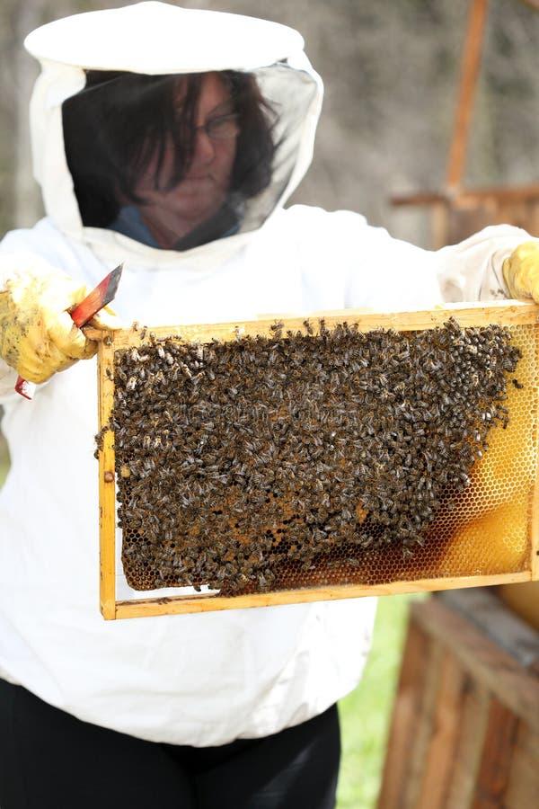 Bienenwächter überprüft lizenzfreies stockfoto
