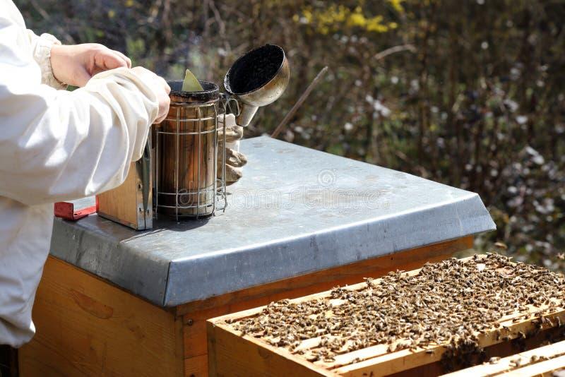 Bienenwächter bereitet einen Raucher vor stockbild