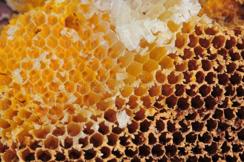 Bienenwabe lizenzfreie stockfotografie