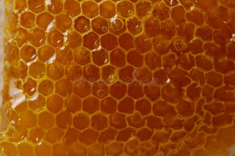 Bienenwabe-Beschaffenheit lizenzfreies stockfoto