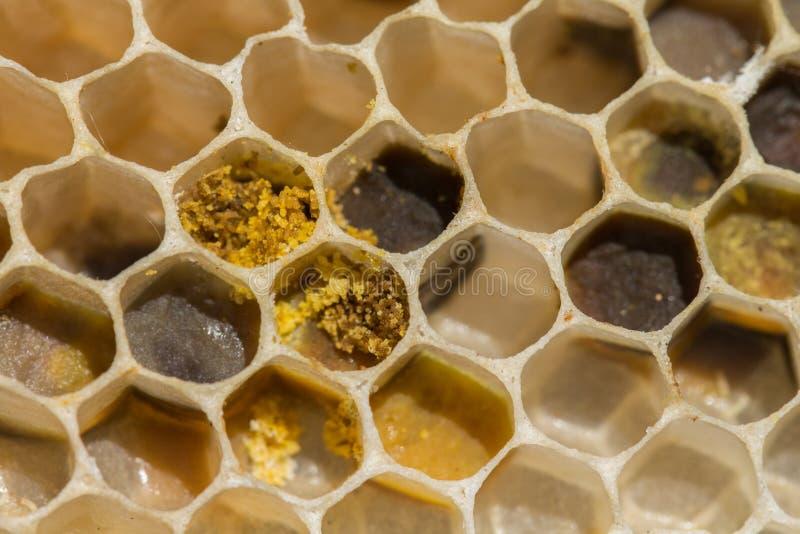 Bienenwabe mit dem Blütenstaub und Wachs stockfotos