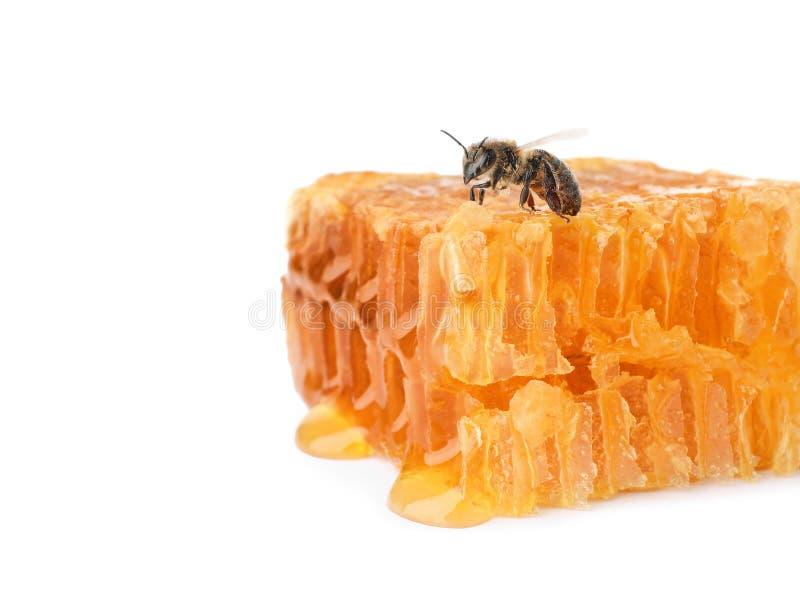 Bienenwabe und Biene auf weißem Hintergrund stockfotos