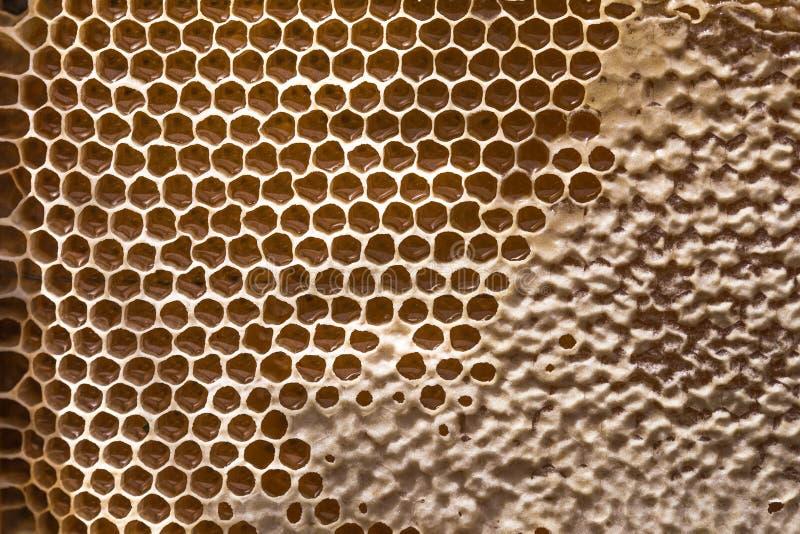 Bienenwabe und h?lzerner Honigsch?pfl?ffel Roher Honig Bienenhonig, Nahaufnahmeansicht lizenzfreie stockfotos