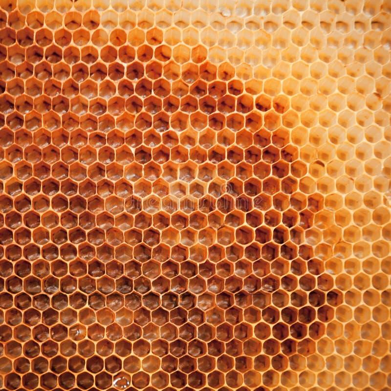 Download Bienenwabehintergrundbeschaffenheit Stockbild - Bild von kolonie, bienenstock: 26366265