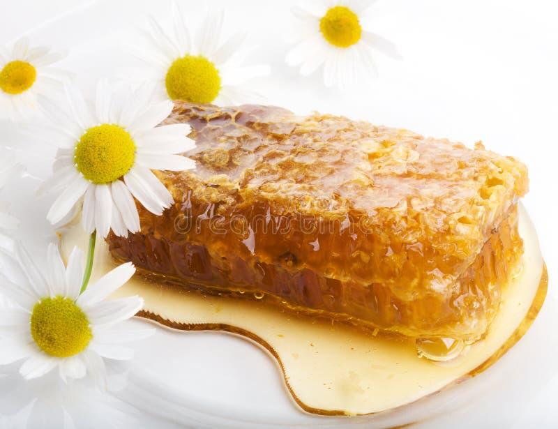 Bienenwaben und Kamille lizenzfreie stockbilder