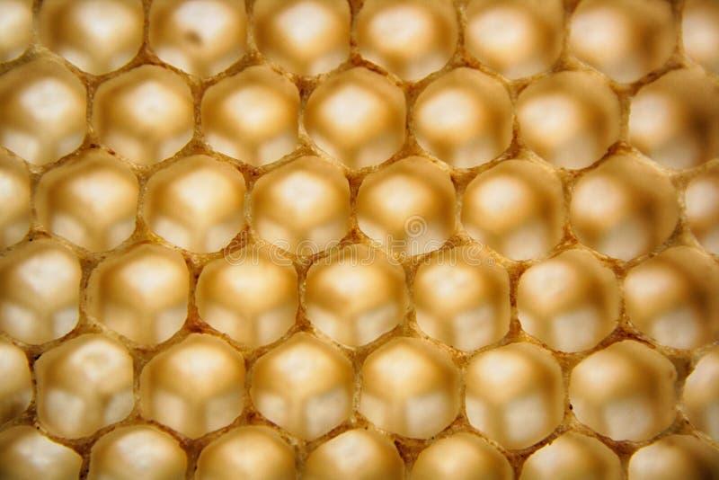 Bienenwachs wirhout Honig stockfotos