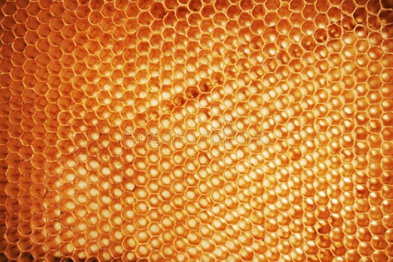 Bienenwachs wirhout Honig lizenzfreies stockbild