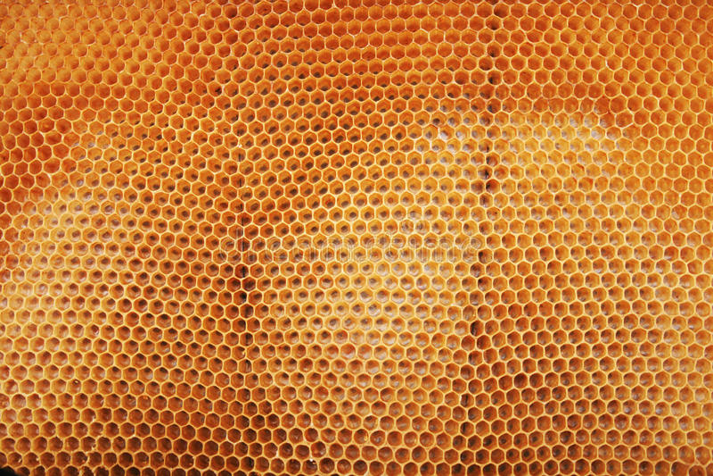 Bienenwachs wirhout Honig lizenzfreie stockfotografie