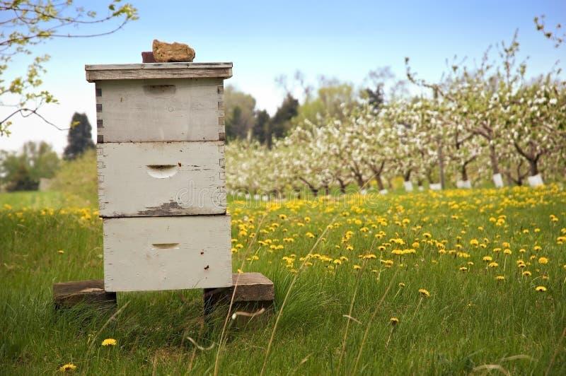 Bienenzucht mit Apfelbäumen stockfotografie