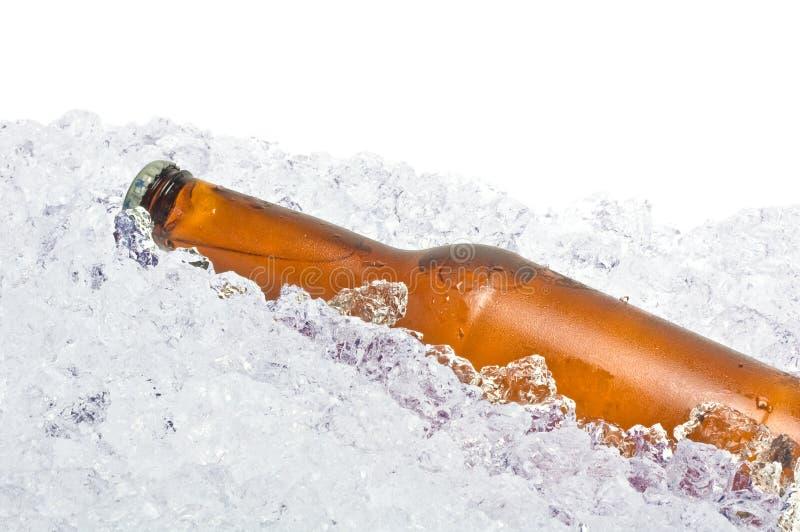 Bier auf Eis lizenzfreie stockfotos