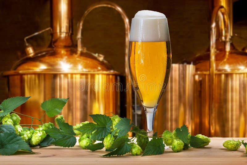 Bier-Glas mit Hopfen und Gerste stockfoto