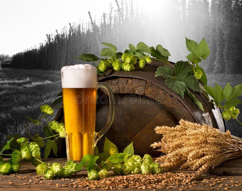 Bier, Hopfen und Weizen lizenzfreie stockfotos