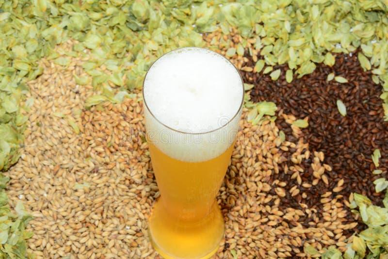 Bier im Glas mit Korn und Hopfen stockfoto