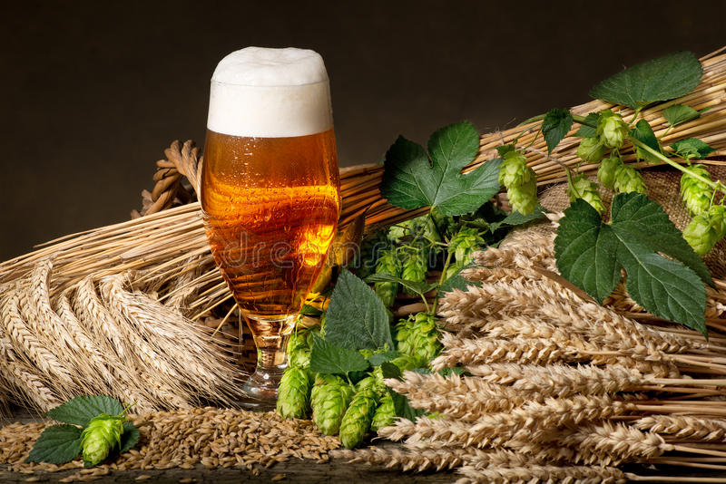 Bier met hop en gerst stock foto