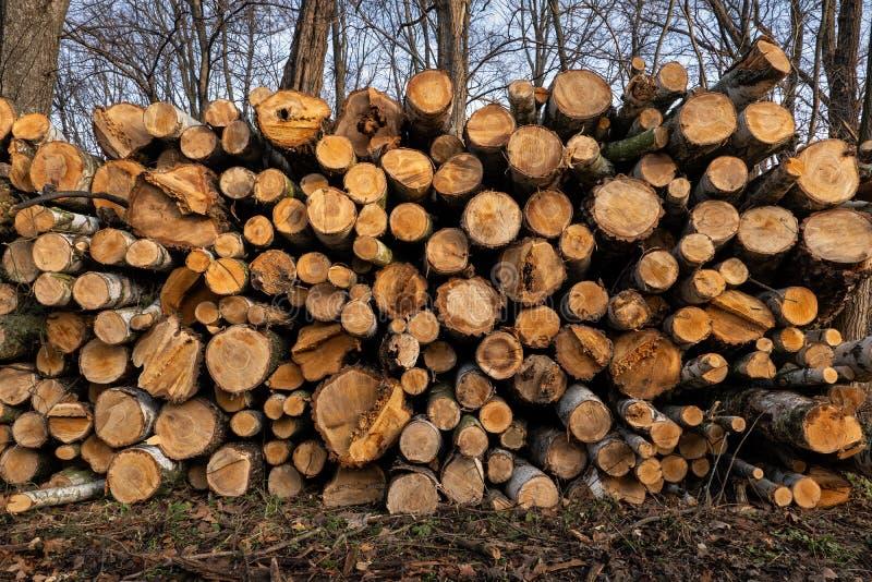 Bierbäume im Wald schneiden lizenzfreie stockbilder