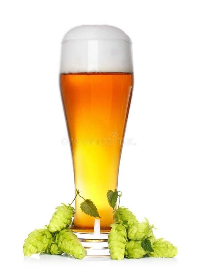 Bierglas mit Hopfen lizenzfreie stockbilder