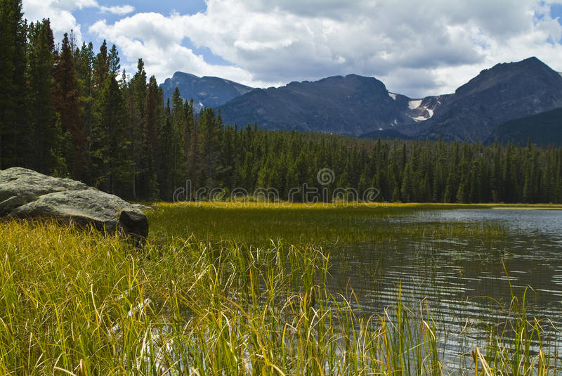 Bierstadt Lake Shoreline Reeds Royalty Free Stock Photography