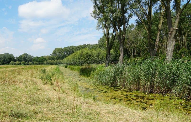 Biesbosch国立公园在荷兰 免版税库存照片