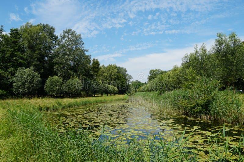 Biesbosch国立公园在荷兰 免版税库存图片