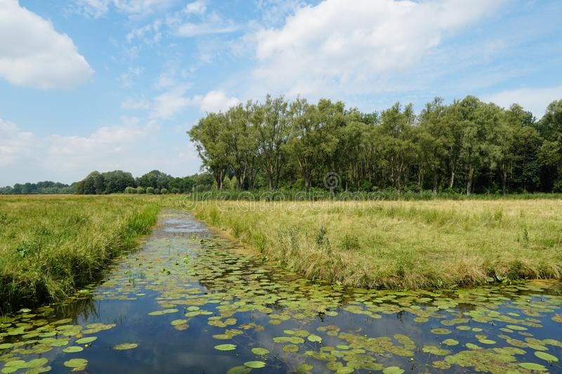 Biesbosch nationaal park in Nederland stock foto