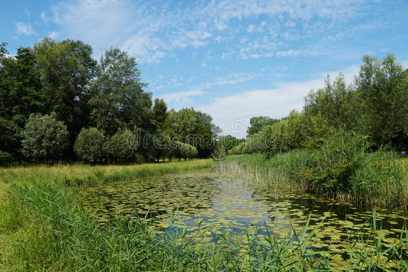 Biesbosch nationaal park in Nederland royalty-vrije stock afbeeldingen