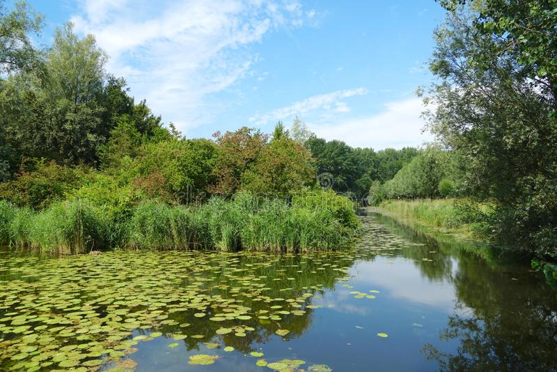 Biesbosch park narodowy w holandiach fotografia stock