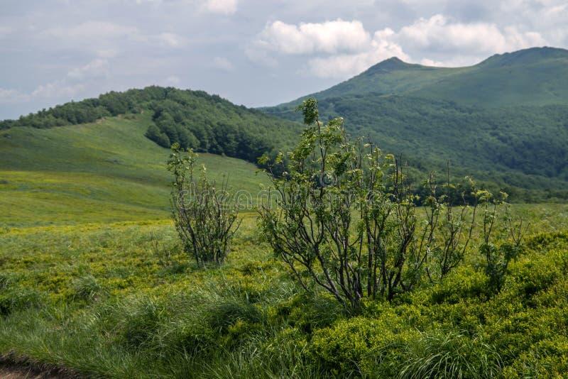 Bieszczady山在波兰 库存照片