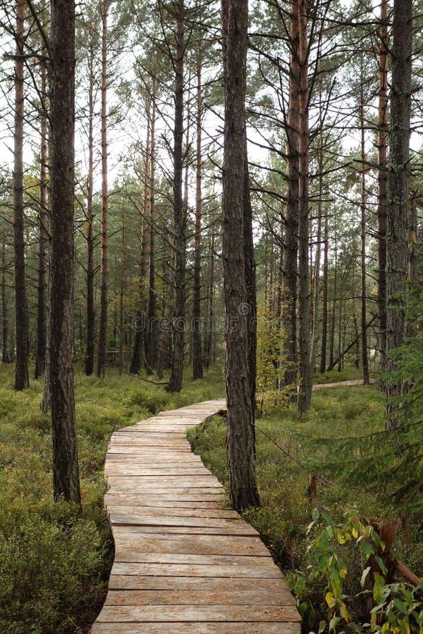 Bieszczady, forêt, montagnes de loup, peatbog images stock