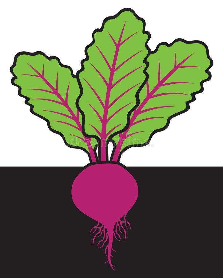 Biet met wortels vector illustratie