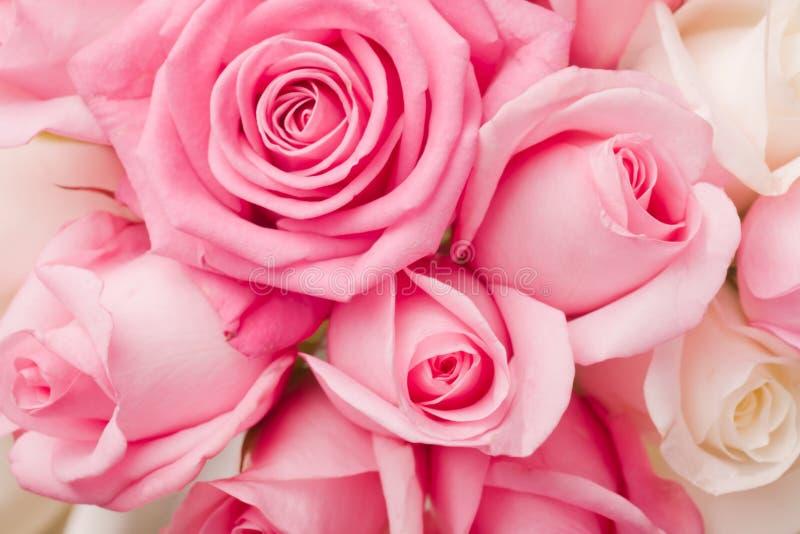 Bieten Sie rosafarbenen Rosen Blumenstrauß an stockbilder