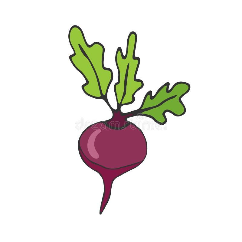 Bieten vectorpictogram Plantaardige Sticker Ingrediënten voor receptenboek royalty-vrije illustratie