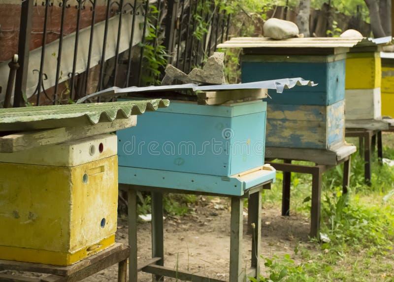Bifluga till bikupan _ En svärm av bin kommer med honunghemmet _ royaltyfri bild