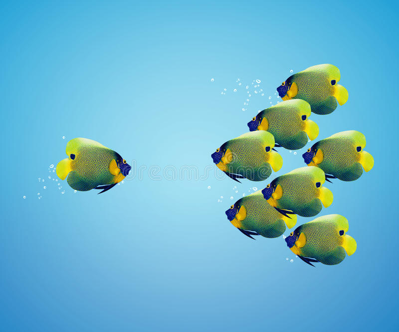 Download Big Angelfish Leading Group Of Angelfish Stock Image - Image: 28073285